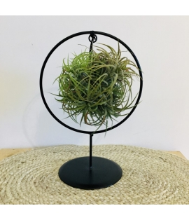 Tillandsia ring medium A