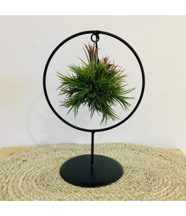 Tillandsia ring medium B